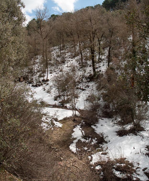 Aun sin hojas, el quejigar que ocupa la umbría ofrece, con la nieve, interesantes estampas.
