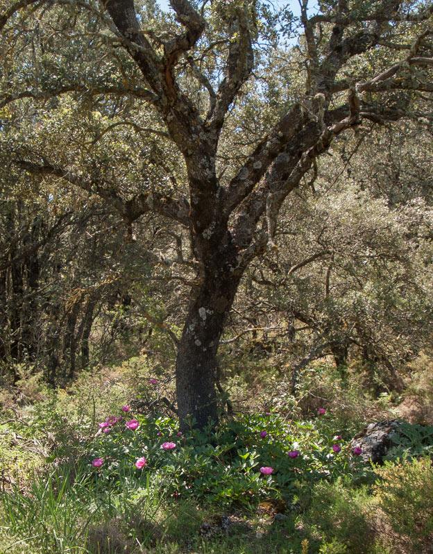 Admiramos nuestra ecológica cruz de Mayo, ornada de flores…