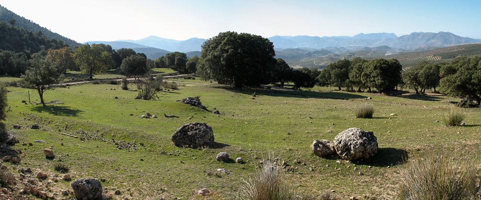 2. Mirando hacia atrás en esta amplia zona de prados. Vemos el arranque del carril que acabamos de descartar. Al fondo, comienza a aparecer el amplio paisaje de las sierras del sur de Jaén.