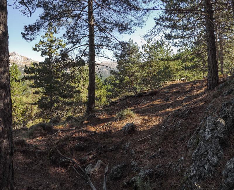 32. … y conforma avanzamos, empezamos a recuperar las vistas hacia el Este, con Majalijar y Sierra Arana jugando al escondite tras los pinos.
