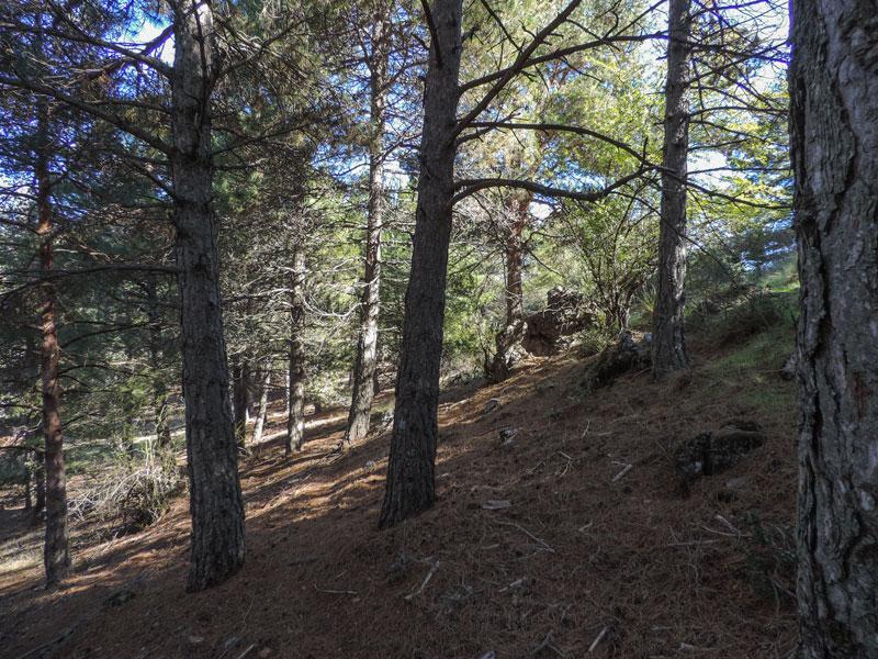 30. Pronto nos damos cuenta de que el terreno se allana al frente y a la izquierda, donde la ladera hace un pequeño montículo. Pasaremos por el collado que hace al unirse a nuestra cresta, y seguiremos a la misma cota después.