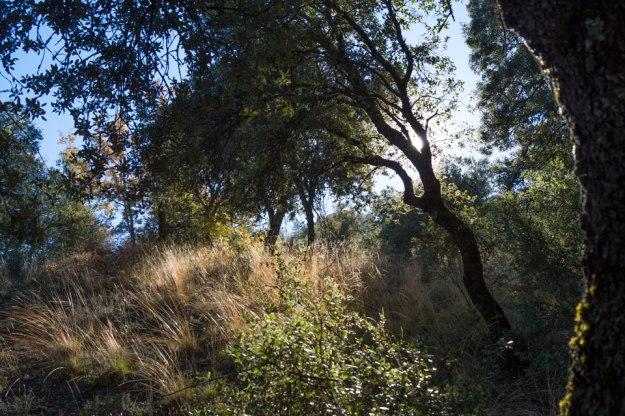 Los árboles y las hierbas altas nos ofrecen aquí hermosos contraluces.