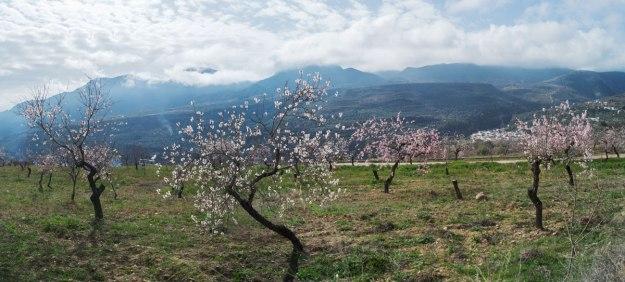 …primero con olivos y almendros en flor.