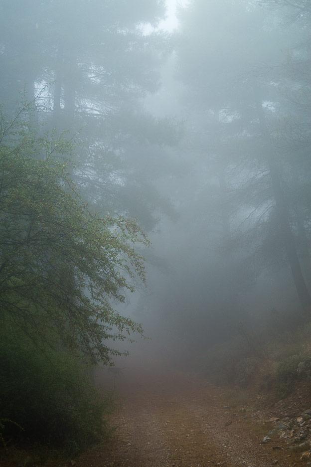 Por momentos el camino se vuelve fantasmal. Los chicos juegan a sentirse perseguidos por invisibles presencias, hasta el punto de asustarse de verdad y venir a cogernos de la mano…