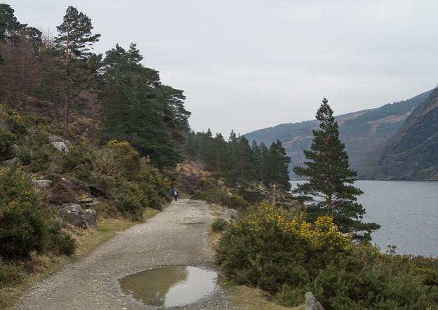 Caminamos ya sobre carril, que bordea el lago enhebrando hermosos rincones entre pinos silvestres, alerces y el omnipresente Ulex.