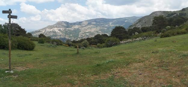 Pues aquí: al mismísimo Collado de Matas Verdes. Uno de los más hermosos de la Sierra, del que las vacas forman parte como los pinos o los gamones.