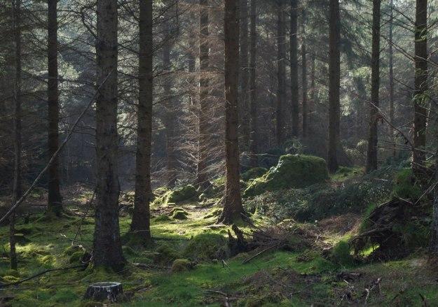 Ya en la meseta superior, el sol juguetea con los árboles y con los informes animales dormidos, cubiertos de hierba, que echaron raíces en un tiempo inmemorial…