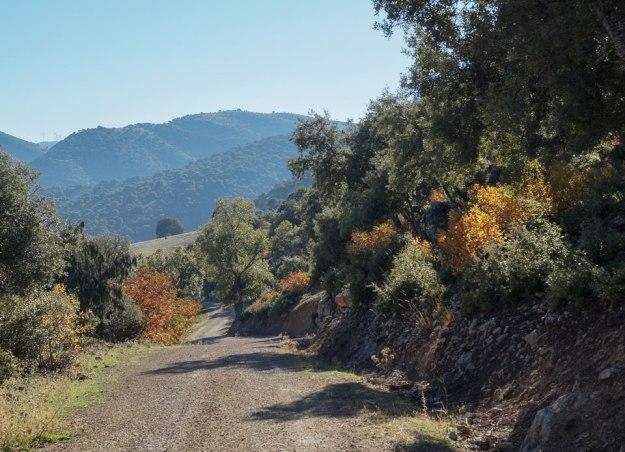 En este último tramo los cornicabras se despiden con una traca final. Al fondo a la izquierda alcanzamos a distinguir los molinos del Cerro del Paredón.