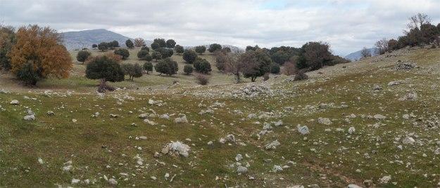 Paisaje de dehesa. Sólo faltan los marranos ibéricos, sustituidos en la zona por ovejas y cabras.