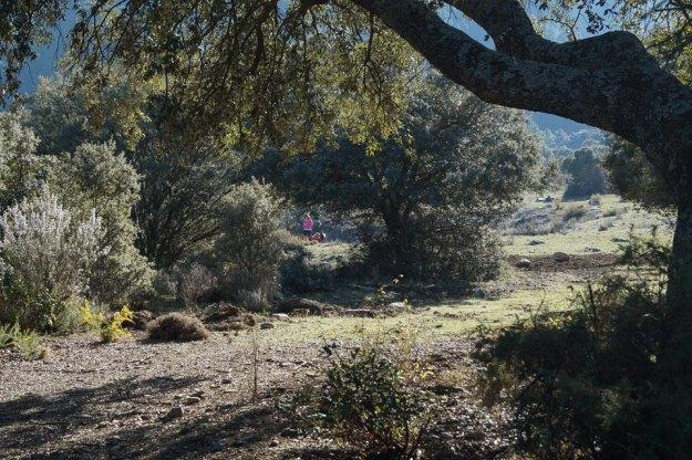 Durante la siesta deambulo por la campiña cercana, internándome entre los árboles más próximos…
